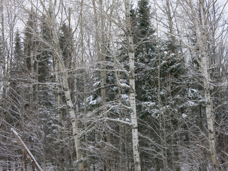 I love how the trees create such an abstract cluster of lines and shapes in the winter.